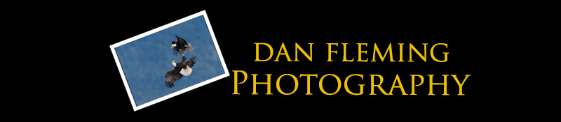 Dan Fleming Photography